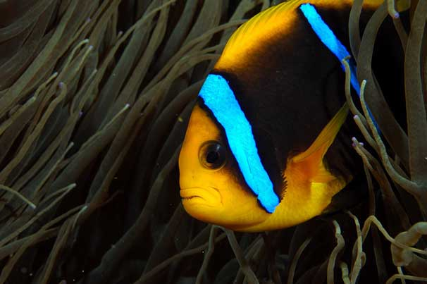 Macro photography fish image