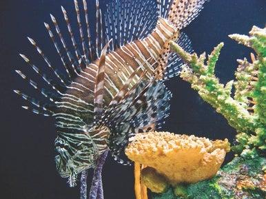Aquarium shot