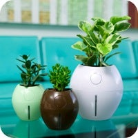 Grobal Self-Watering Pot